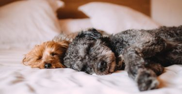 Entspannt im Bewerbungsgespräch: schlafende Hunde