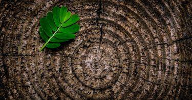 Green Jobs - arbeiten im Grünen. (Blatt auf einem Baumstumpf)